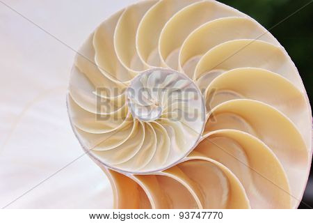 nautilus shell cross section spiral