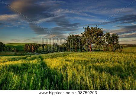 Evening field scenery