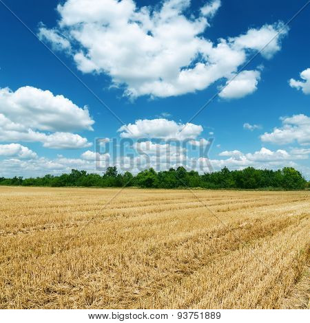 agricultural field after harvesting under deep blue sky with clouds