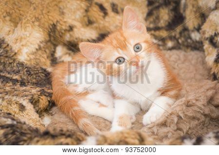 Hypnotic Kitten