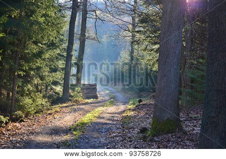 Beauty Spring Forest