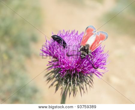 A Beetles Sits On A Flower