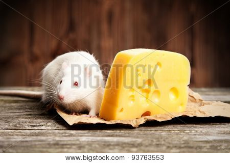 Pet rat with a large piece of cheese, wooden background