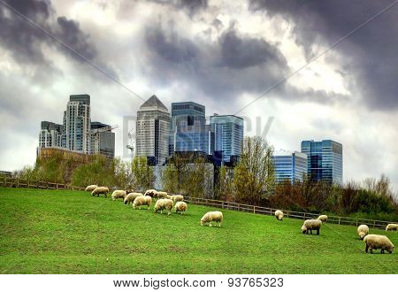 LONDON, UK - MARCH 29, 2014 Canary Wharf view from the local farm.
