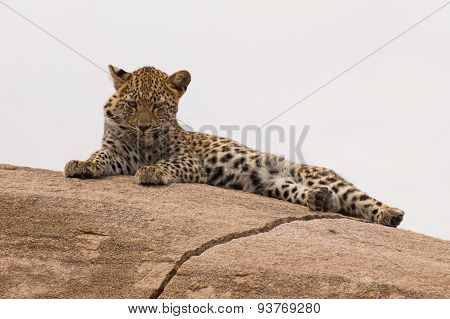 Leopard Cub Resting On A Large Rock Waiting For Mother