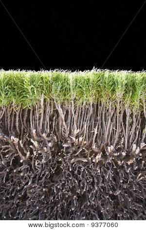 Cut Of Green Bush