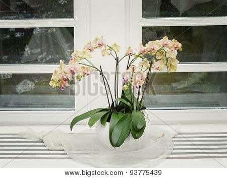 Pink orchid on a window sill.