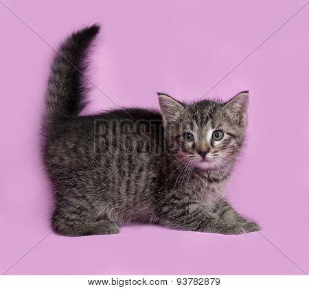 Fluffy Tabby Kitten Standing On Pink
