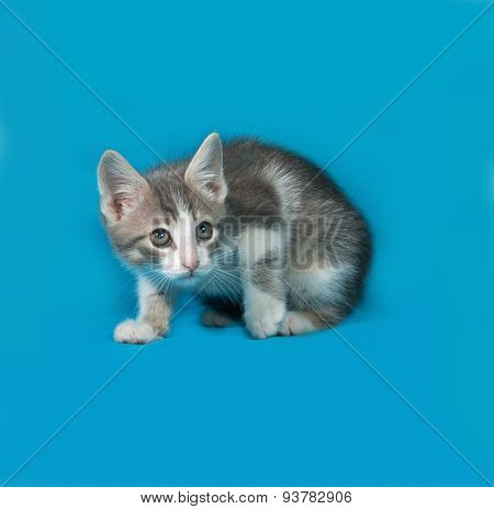 Small White And Tabby Kitten Sitting On Blue