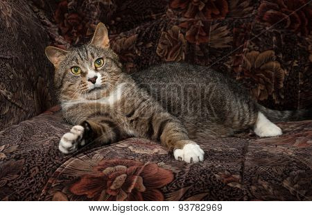 Tabby And White Cat Lying On Chair