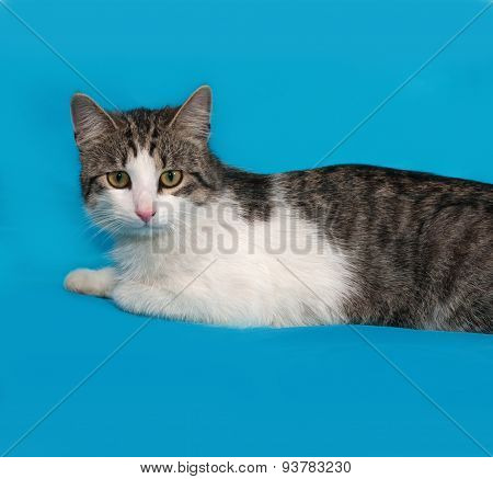 White And Tabby Cat Lies On Blue