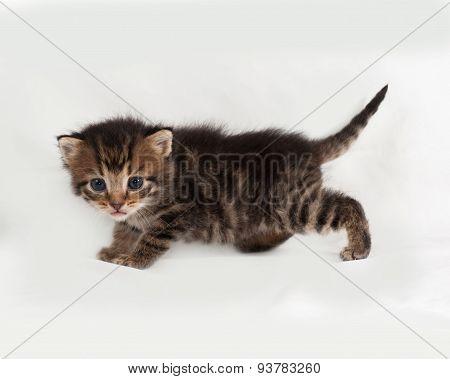 Little Tabby Kitten Goes On Gray