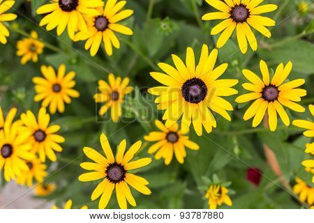 bouquet of yellow daisies in the foliage