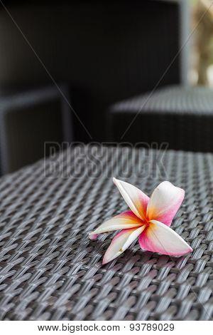 Plumeria Flowers? On Woven Rattan