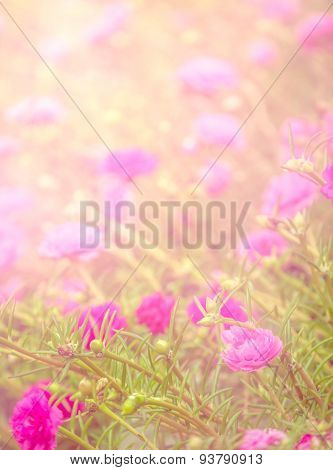 Soft Pink Flower Background
