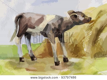watercolor illustration of a calf eating hay