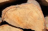 picture of firewood  - Stacks of chopped firewood prepared for winter - JPG