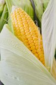 foto of corn  - Sweet corn closeup - JPG
