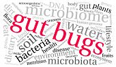 pic of water bug  - Gut Bugs word cloud on a white background - JPG