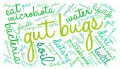 stock photo of water bug  - Gut bugs word cloud on a white background - JPG