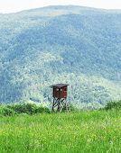 foto of hunters  - New hunter tower looking on woods below - JPG