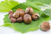 stock photo of hazelnut  - Raw hazelnuts on a green leaf in the shell and with broken shells  - JPG