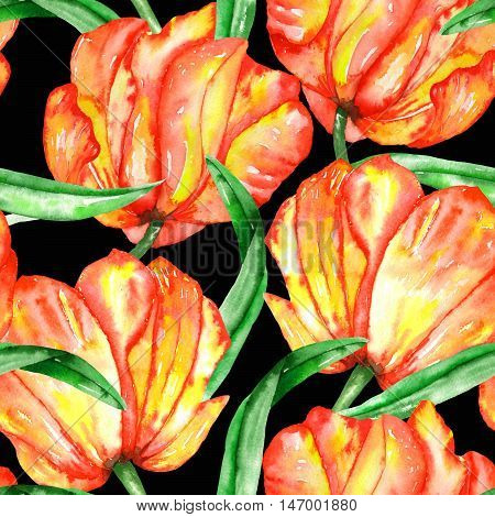 A seamless pattern with the watercolor crimson and scarlet tulips on a black background