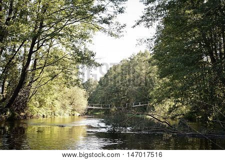 small river in the forest wooden bridge