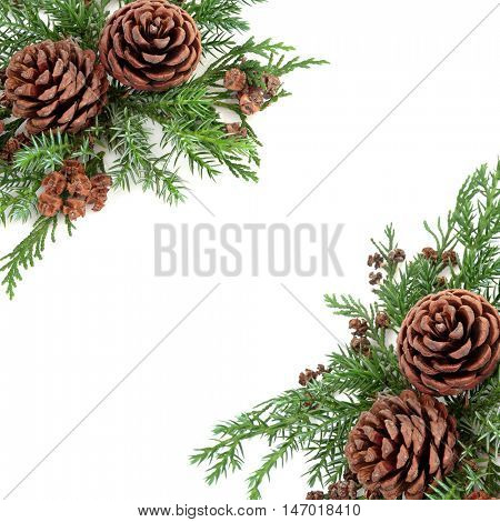 Winter background border with pine cones, cedar cypress and fir over white background.