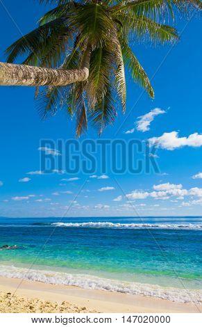 Sea Trees Overhanging