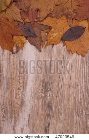 Autumn Time Background Some fall leaves on weathered wood with copy space for your message