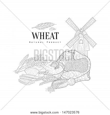 Wheat Natural Product Hand Drawn Realistic Sketch With Windmill. Hand Drawn Detailed Contour Illustration On White Background.