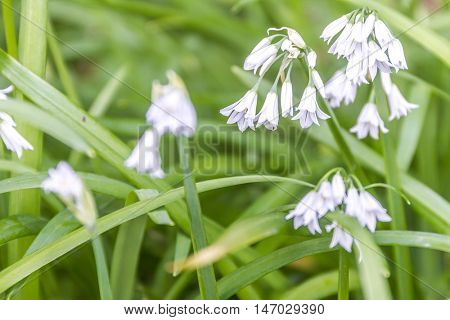 white forest flowers on green background