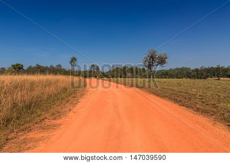Dirt road on savanna forest with blue sky.