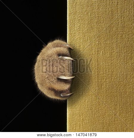 A cat's paw with long and sharp claws on a book cover.