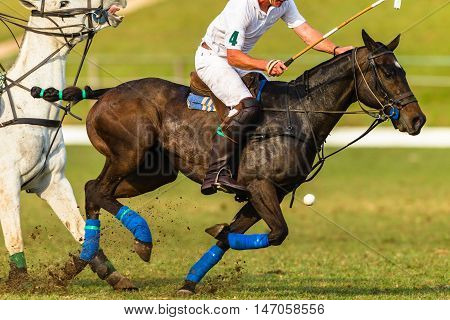 Polo players horse ponies closeup abstract equestrian game action