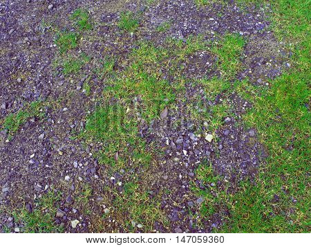 Texture of Crushed stone and green grass