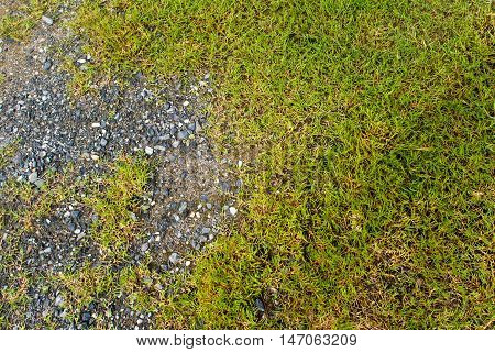 Texture of Crushed stone and grass / green background