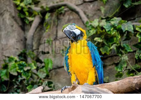 Blue and-yellow macaw sitting on a branch