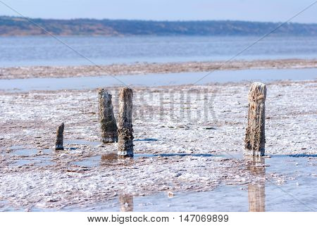 Petrified tree stubs on the bank of the salty lake, Kuyalnik, Ukraine. Global warming, climate change