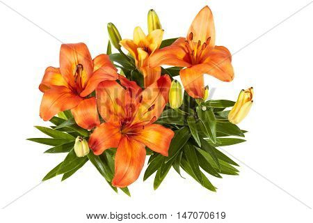 Isolated Top View Of Flowers And Buds Of Asian Lily