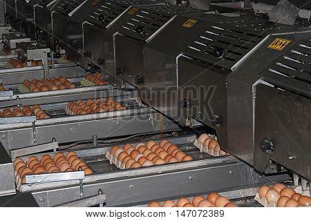 Industrial packaging lines encasing eggs and casseroles