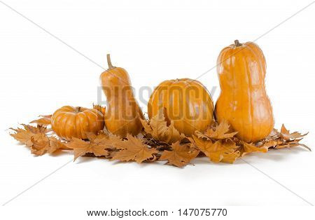 Pumpkins in Row with Leaves of Maple