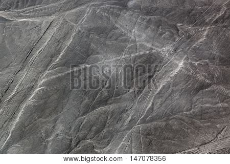 beautiful drawing dog to the desert of Nazca