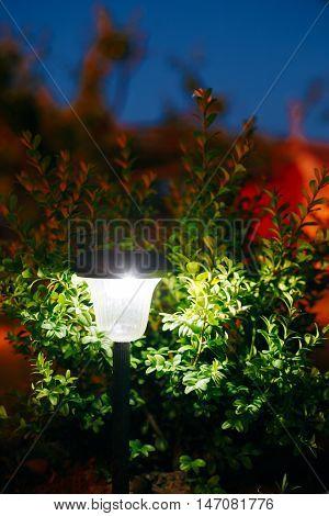 Decorative Small Solar Garden Light, Lanterns In Flower Bed In Green Bushes. Garden Design. Solar Powered Lamp. Blue Evening Sky
