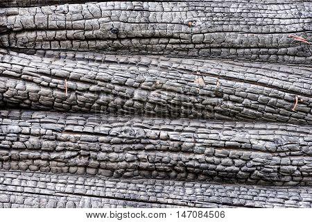 Black charred wood pattern. Burned tree texture background. Burnt log.