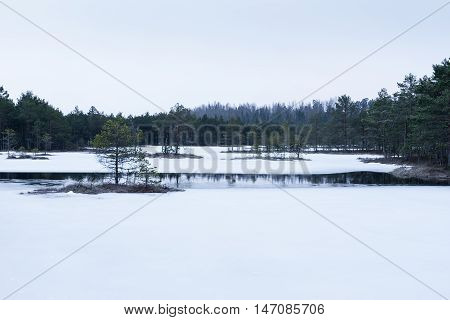 Winter in the bog. Icy cold marsh. Frosty ground. Swamp lake and nature. Freeze temperatures in moor. Snowy fen. Muskeg natural environment. Sediment trees snow and water.