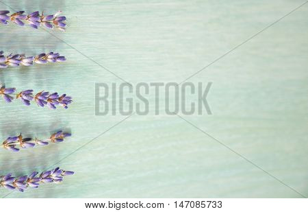 Bunch of lavande on blue background, flowers and plants, France