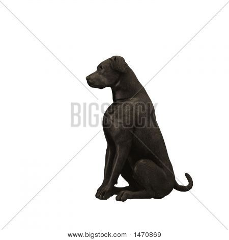 Black Labrador Retriever - 01