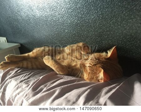 Cat, sleeping, funny, slept, feline, Handsome, cool
